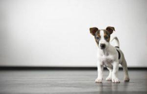 Razões-para-castrar-animais-de-estimação