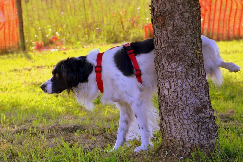 Ensinar um cão a fazer as necessidades no lugar certo